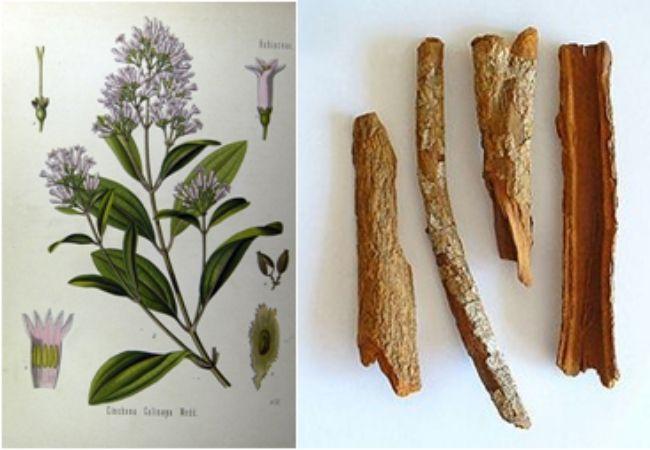 Filosofia e Historia da Biologia 6 enigma botánico de las quinas