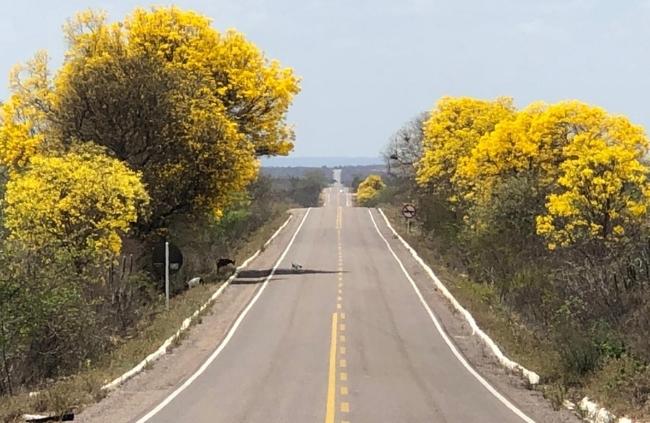 BR 315 Km 315 Floresta-PE Foto IF